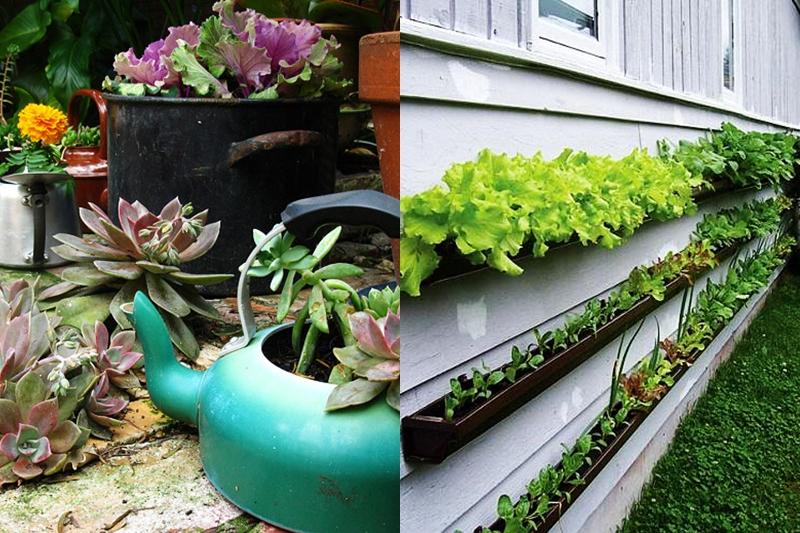 mp-upcycling plantes