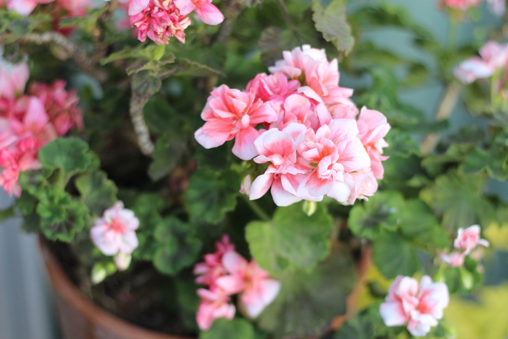 silence-ca-pousse-jardin-naturel-balcon-5-1