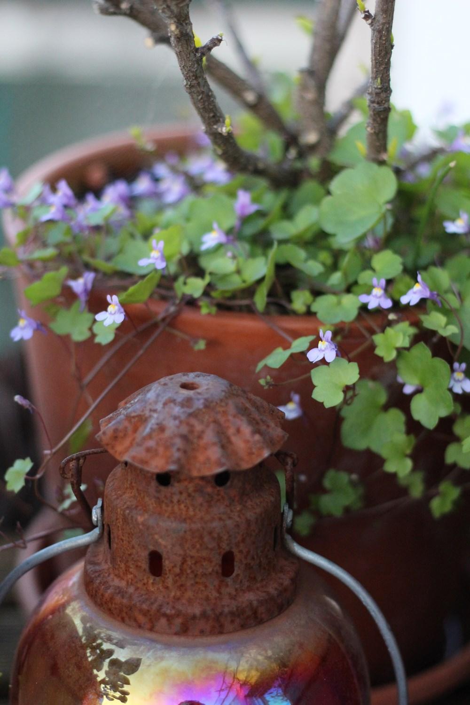 silence-ca-pousse-jardin-naturel-balcon-5-9