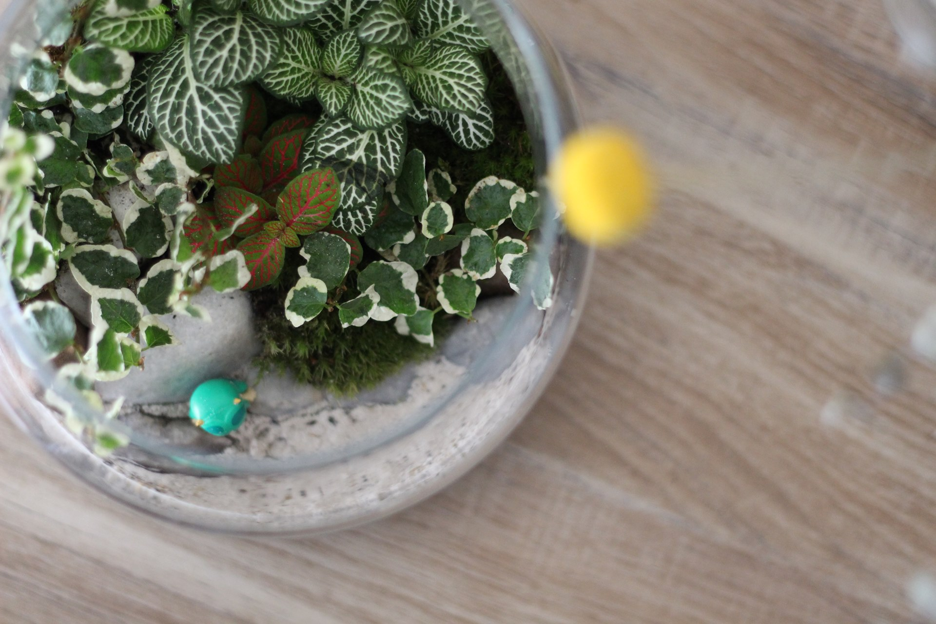 diy terrarium et si vous vous mettiez au vert. Black Bedroom Furniture Sets. Home Design Ideas